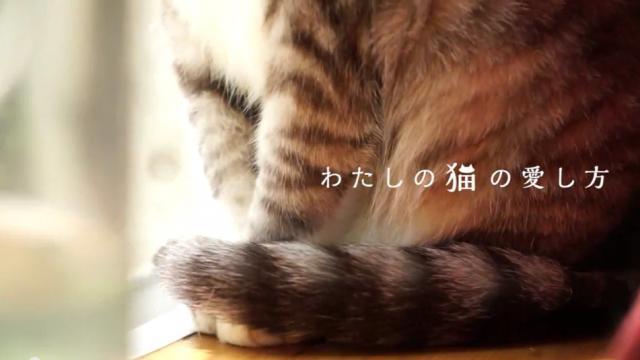 花王 わたしの猫の愛し方 坂本美雨×サバ美 本編 ニャンとも清潔トイレ